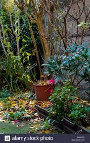 Cottage Garden  Gardening IdeasRomantic Cottage Gardens