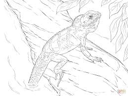 Small Picture Realistic Chinese Water Dragon coloring page Free Printable