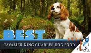 Cavalier Weight Chart 6 Best Cavalier King Charles Spaniels Dog Food Plus Top