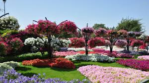 Small Picture cliserpudo Beautiful Flower Garden Wallpaper Images