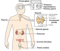 Comparative Functions Of Nervous And Endocrine Systems Chart The Nervous And Endocrine Systems Review Article Khan