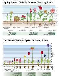 soil temperature and spring bulb growth aol image search results