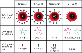 Different Blood Types Chart Blood Type Wikipedia