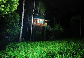 Dream Catcher Kerala Best Munnar Treehouse Resorts Kerala Treehouse 88