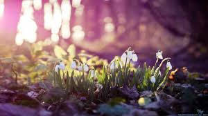 early spring wallpaper hd. Plain Early Early Spring Wallpaper Hd  Wallpapers For Early Spring Wallpaper Hd Cave