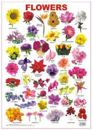 Flower Chart With Its Beautiful Colourful Pictures