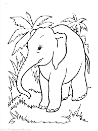 Elephant Color Pages Print Baby Elephant Coloring Page Elegant