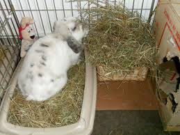 rabbit hay racks what are the options