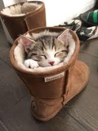 نتيجة بحث الصور عن القطط وهي نائمة..
