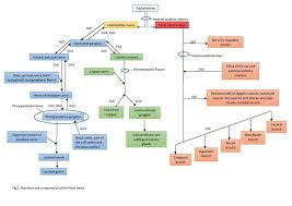 Branches Of Trigeminal Nerve Flow Chart Figure Branches And Components Of The Facial Nerve