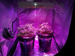 Best Led Light For Plant Growth Which Led Grow Lights Are Best For Growing Cannabis Grow