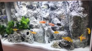Aquarium Background Pictures Aquarium Background For Marine Fish Tanks Or Cichlids Aquariums The