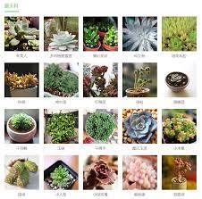 多肉 植物 種類