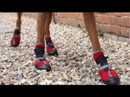 Dog gets boots to protect against grass allergy - YouTube