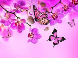 orchid erflies pink color