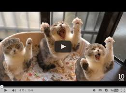 Und Strecken Süße Katzen Machen Dehnübungen
