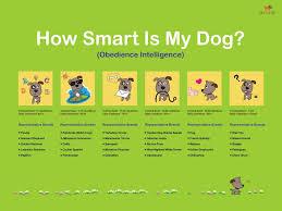 Dog Intelligence Iq