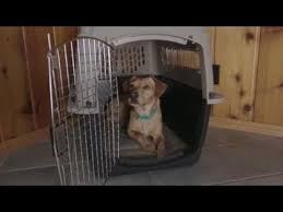 Petmate Vari Kennel Is Ideal For Pet Training Or Traveling