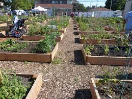 Small Picture community garden design Chicagos urban farming movement in a