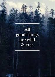 Thoreau Quotes Unique All Gud Things R Wild N Free Inspirational Pinterest Inspirational