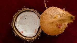 Image result for Know why women's are barred from breaking coconut?