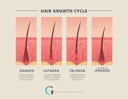 hair growth and shedding philadelphia