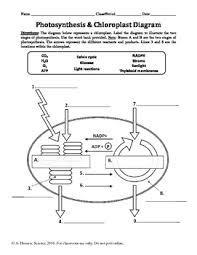 Photosynthesis Chart Worksheet Photosynthesis Chloroplast Diagram Labeling Worksheet