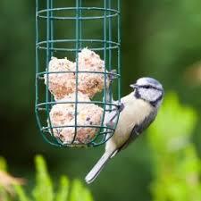 a bird eating suet out of a feeder