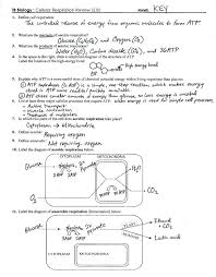 Venn Diagram Photosynthesis And Cellular Respiration Photosynthesis Diagram Worksheets Answers