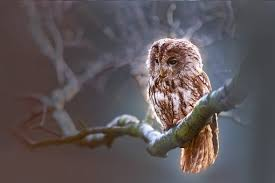 3,000 High-Quality <b>Owl</b> Pictures & Images [HD] - Pixabay