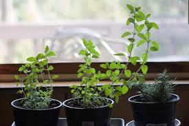 indoor herb pots