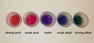 Bicarbonate Indicator Colour Chart Science Club An Acid Base Indicator Using Red Cabbage