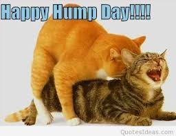 Happy Hump Day Quotes Custom Funny Happy Hump Day Quotes Memes Sayings 48 48 48
