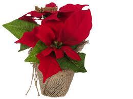 Details Zu Künstlicher Weihnachtsstern Christstern Poinsettie Kunstblume Dekopflanze Rot