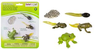 Parts Of A Frog Amazon Com Safari Ltd Life Cycle Of A Frog Toys Games