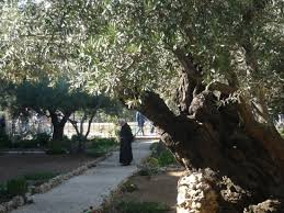 garden of gethsemane jerum 2019 all you need to know before you go with photos tripadvisor