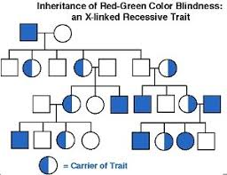 Pedigree Chart Wilson Biomedical Technology