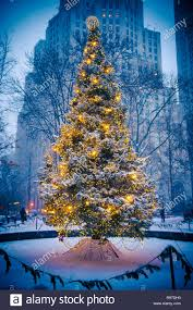 Christmas Tree Lighting Anchorage Snow Covered Christmas Tree With Golden Lights Glowing