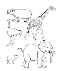 Safari Animals Template African Animal Template Animal Templates Free Premium