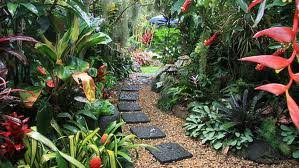 Small Picture Tropical Garden Plants decorating clear