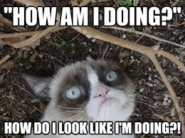 Stressed Grumpy Cat memes | quickmeme via Relatably.com
