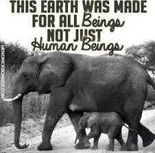 Animal Rights Quotes Impressive Elephants Vegan Animal Rights Animal Liberation Vegetarian