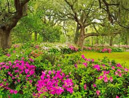 Full Size of Plant:garden Ideas Stunning Garden Flowers Plant Tulips En  Mass For A ...