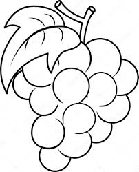 Small Picture Grape Coloring Page Stock Photo lenmdp 48929985