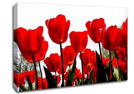 >red tulip skies flowers canvas stretched canvas flowers red tulip skies canvas art