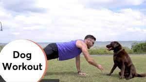 dog workout you
