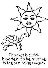 Small Picture Free fun facts about tortoises coloring pages from our Tortoises