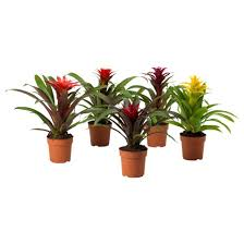 plants for office cubicle. Plants For Office Cubicle Find This Pin And More On Decor By Jes7116: I