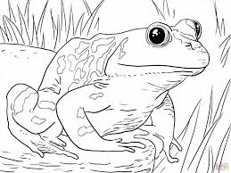 Small Picture Poison Dart Frog Coloring Page Free Printable Donald Duck With