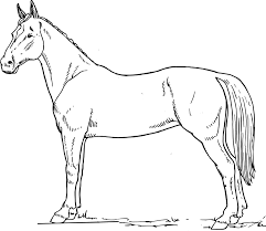 Small Picture Printable 30 Free Printable Realistic Horse Coloring Pages 3806